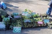 Традиционные ярмарки для садоводов-любителей начнут работать на площади Ленина в Ангарске с 20 апреля